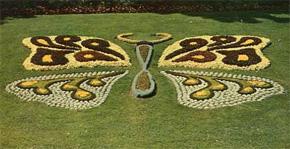 caen autrefois papillon floral au jardin des plantes - Jardin Des Plantes Caen